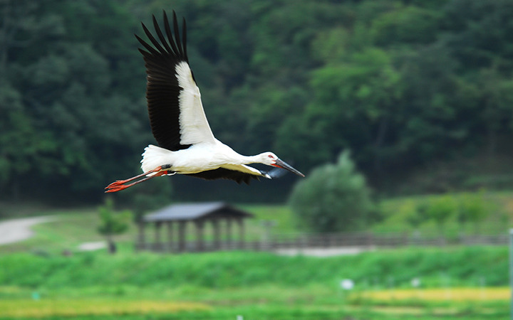 Hyogo Park of the Oriental White Stork
